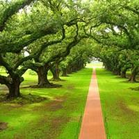 деревья для озеленения города