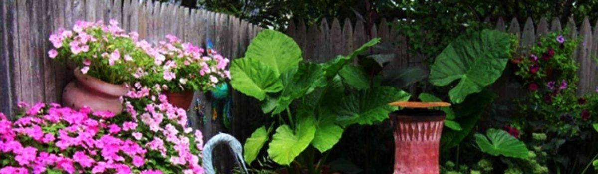 Растения для ландшафтного дизайна