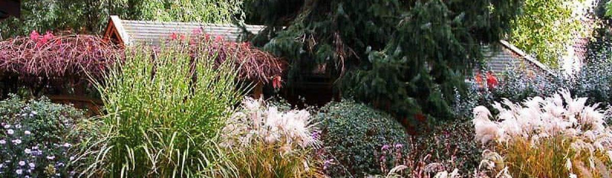 Травы в ландшафтном дизайне
